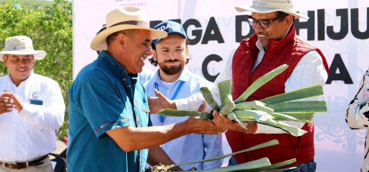 Cultivarán 5 hectáreas con agave espadín y entregan espacio público en las Gallinas