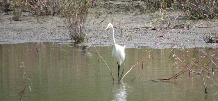 Conmemoran XIII Aniversario de Área Natural Protegida en Neutla