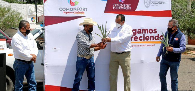 Buscan incrementar producción mezcalera en Comonfort