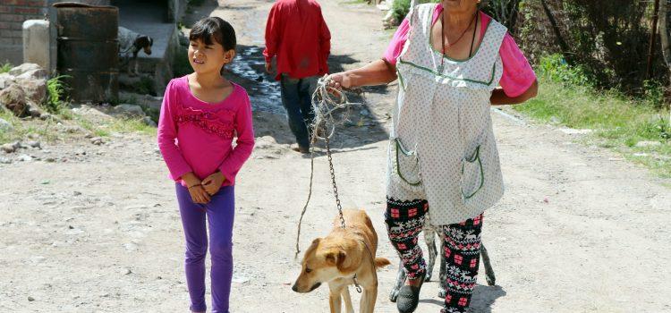 Esterilizan 300 mascotas en Comonfort
