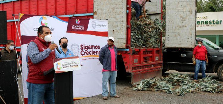 Otorgan 74 mil plantas a mezcaleros de Comonfort